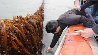 세월호 기름유출 어민피해액 17.8억원 잠정추산