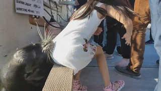 바다사자의 '습격'…캐나다 부둣가서 소녀 낚아채
