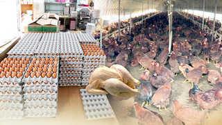 정부, 계란 500만개ㆍ닭고기 2천100t 푼다