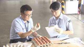 [현장영상] 태국산 계란 검역 샘플 도착…판매용은 22일 반입 예정