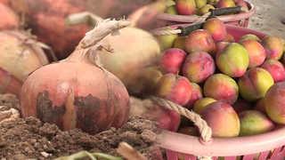 가뭄 피해 확산…양파ㆍ자두 농가 한숨