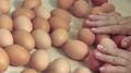 Corea del Sur encuentra huevos contaminados con pesticida