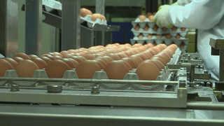 유통불가 살충제 농장 32곳…계란 유통량 86% 회복
