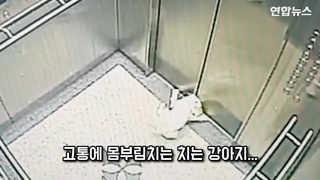 [현장영상] 엘리베이터서 목 졸린 강아지, 경찰관 도움으로 구사일생