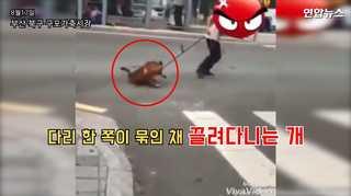 [현장영상] 탈출한 개 붙잡아 차도에서 질질…개시장 종업원 조사