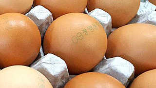 """계란물량 96% 정상 공급…""""향후 유통되는 계란은 안전"""""""