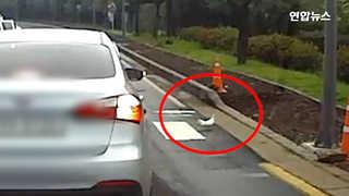 [현장영상] 횡단보도 건너는 비둘기…승용차는 어떻게 했을까