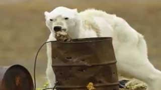 [핫뉴스] 털 빠지고 뼈 드러나고…쓰레기통 뒤지는 북극곰 外