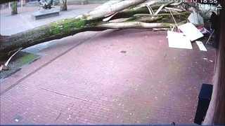 [현장영상] 사람 날아가고 나무기둥 뽑히고…유럽, 폭풍에 혼비백산