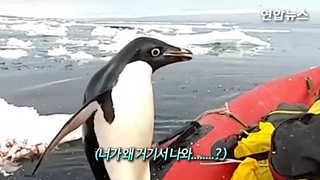 [현장영상] '뭐 좀 없나'…남극 펭귄, 보트 올라타고 기웃기웃