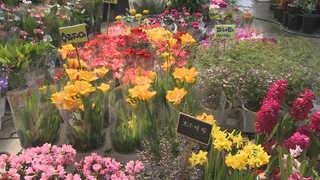 겨울의 막바지…봄내음 물씬 풍기는 꽃시장