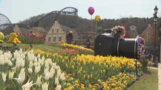 120만 송이 봄꽃 '활짝'…에버랜드 튤립축제