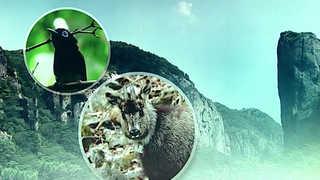 경북 주왕산 야생생물 3천여종…10년 사이 2배로