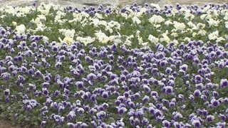 화사한 봄 꽃의 향연…나들이객 북적