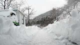 눈 안 오는 부산에 0.7㎝ 봄눈…강풍 피해도 이어져
