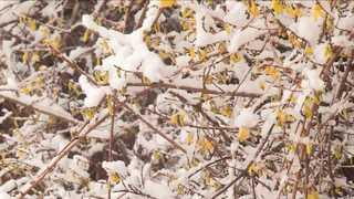 봄 시샘하는 '폭설'에 비경…도로 막히고 학교는 휴교령