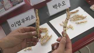 '가짜 백수오' 업체 상대 집단소송 또 패소