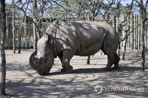 데이팅앱에 등장한 지상 최후의 수컷 북부흰코뿔소