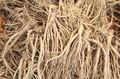 정부, 도라지 재배 농가에 FTA 피해보전직접지불금 지급