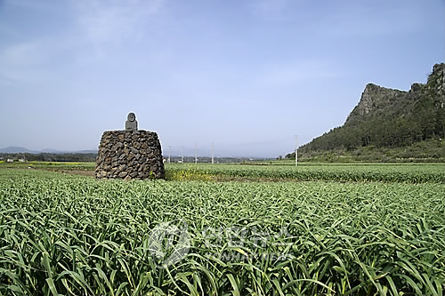 [제주 돌문화] ② 섬 곳곳 산재한 유산들 사라지고 잊히고