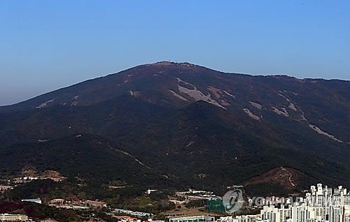 억새 물결 해운대 장산 정상서 29일..