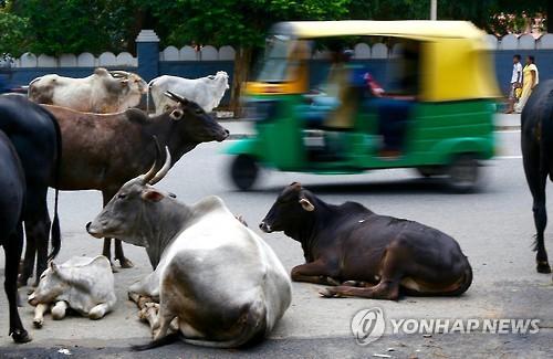 인도 '쇠고기 근절 드라이브'에 벌벌떠는 무슬림