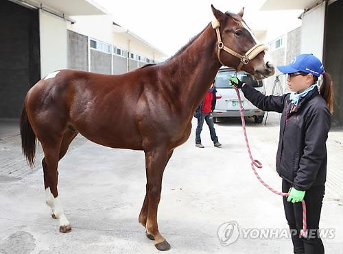 국내산 경주마 제주 경매…내달 1일 124마리 상장