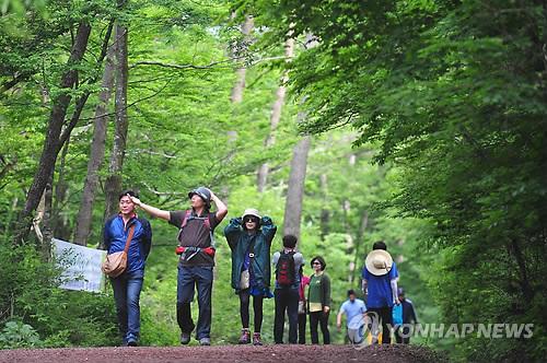"""[주말 N 여행] 제주권: """"싱그러움 가득"""" 사려니숲 에코힐링 체험"""