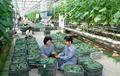 NK vegetable lab