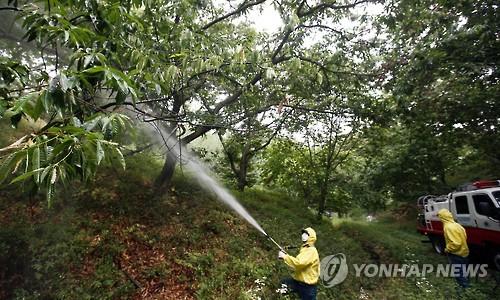 폭염·가뭄에 돌발해충까지…원주시 '방제 총력'