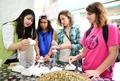 Foreigners visit Daegu herbal medicine market