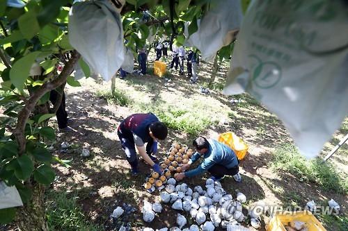 울산시, 농업인 보험가입 지원…농작물재해보험 등에 20억