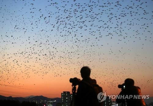 """""""태화강 아시아버드페어 성공적"""" 집행위, 울산시장에 감사편지"""