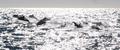 Delfines en las aguas de Ulsan