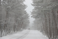 Randonnée sous la neige