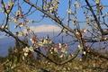 済州島に春の便り