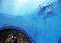 '귀한 고래 또 죽을라'…정부·환경단체, 전국 사육시설 조사