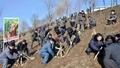 Tree planting in North Korea