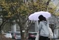 [날씨] 비 내리다 오전에 그쳐…중부지방 안개 '운전조심'(29일)
