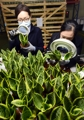 Officials inspect flowering plants from China