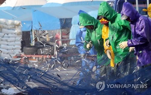 '고소한 맛이 일품' 기장 멸치축제 ..