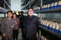 N.K. leader inspects mushroom farm