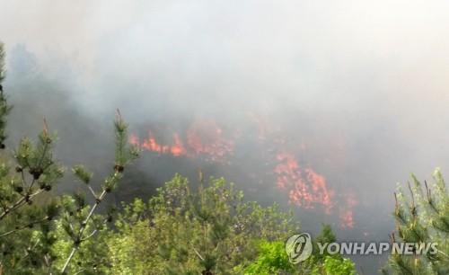 강릉 연곡면서 담뱃불 추정 산불…0.3㏊ 태워