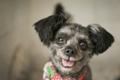 Un perro abandonado se convertirá en la 'primera mascota'