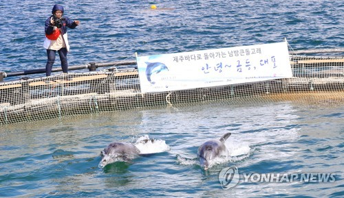 방류된 돌고래 금등·대포 5개월째 실종…살았니 죽었니