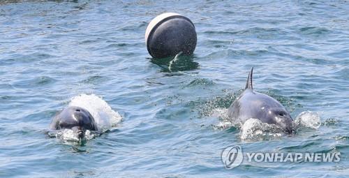 남방큰돌고래 금등·대포가 이겨내야 할 다섯가지 난관