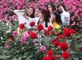 Belles et roses