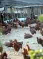 Resurge la gripe aviar en una estación inusual
