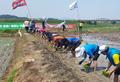 Plantando el 'arroz de la unificación' por el aniversario de la cumbre