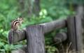 Repos d'un écureuil